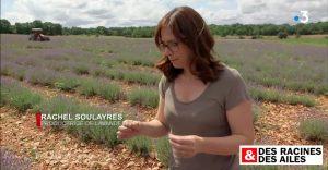 Des Racines et des ailes - Rachel Soulayres, productrice de lavande bio