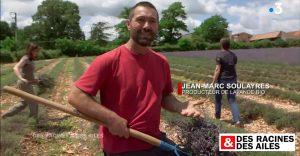 Des Racines et des ailes - Jean-Marc Soulayres, producteur de lavande bio